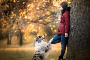 Online kurz Základní poslušnost psa - pro dospělého psa